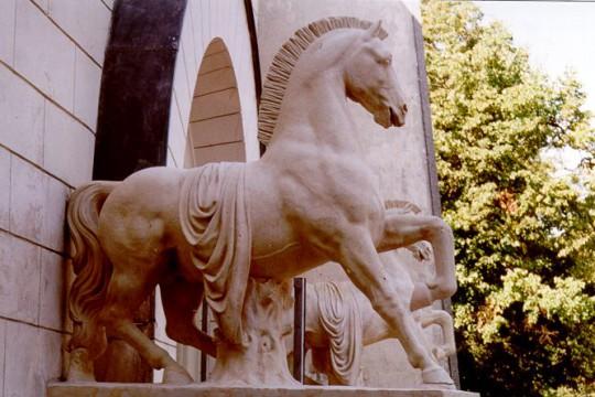Koń turecki – czyli jaki?