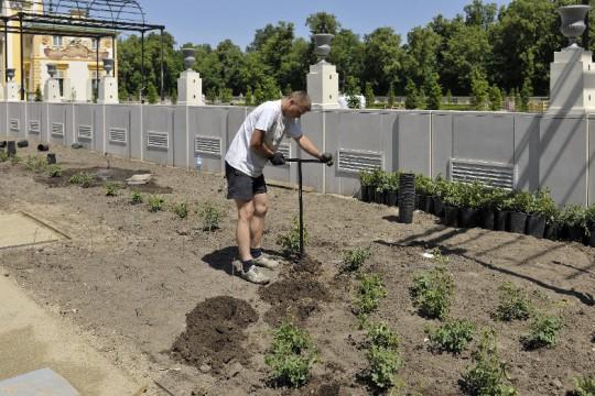 9_nowe nasadzenia w ogrodzie różanym.jpg