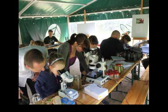 Pod mikroskopami oglądamy plankton złowiony w wilanowskim jeziorze. fot. Katarzyna Tylkowska.jpg