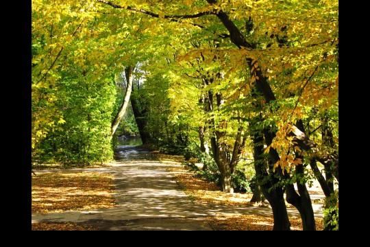 Jesień w ogrodach wilanowskich, fot. J. Dobrzańska03.JPG