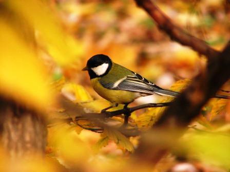 Jesień w ogrodach wilanowskich, fot. J. Dobrzańska07.JPG