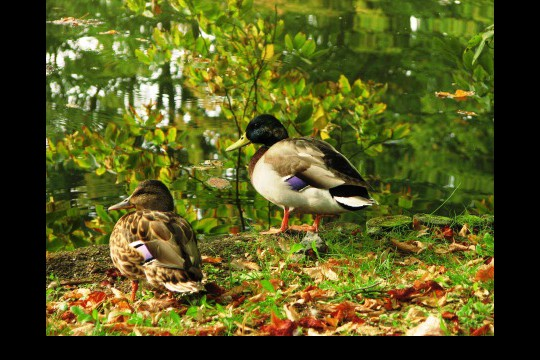 Jesień w ogrodach wilanowskich, fot. J. Dobrzańska08.JPG