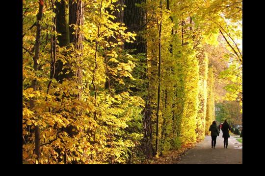 Jesień w ogrodach wilanowskich, fot. J. Dobrzańska10.JPG