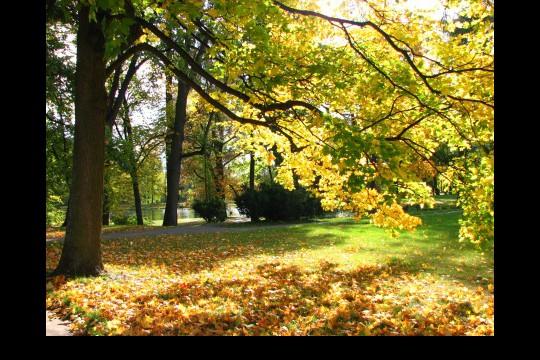 Jesień w ogrodach wilanowskich, fot. J. Dobrzańska16.JPG