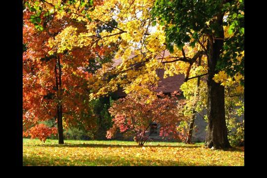 Jesień w ogrodach wilanowskich, fot. J. Dobrzańska18.JPG
