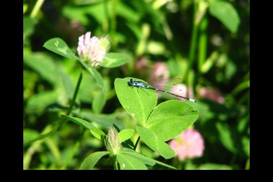 Lato w ogrodach wilanowskich, fot. J. Dobrzańska0103.JPG