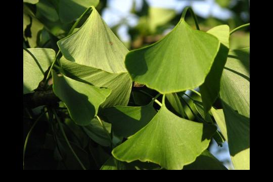 Lato w ogrodach wilanowskich, fot. J. Dobrzańska0108.JPG