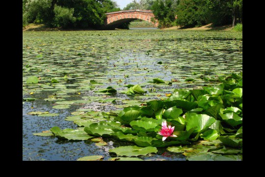 Lato w ogrodach wilanowskich, fot. J. Dobrzańska0116.JPG