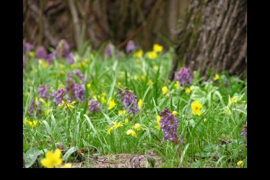 Wiosna w ogrodach wilanowskich, fot. J. Dobrzańska02.JPG