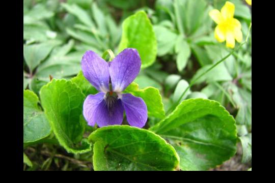 Wiosna w ogrodach wilanowskich, fot. J. Dobrzańska03.JPG