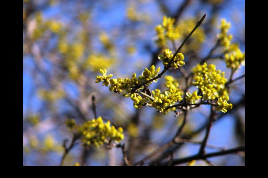 Wiosna w ogrodach wilanowskich, fot. J. Dobrzańska05.JPG