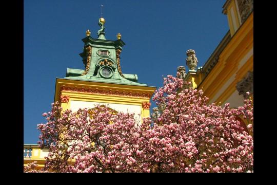 Wiosna w ogrodach wilanowskich, fot. J. Dobrzańska08.JPG