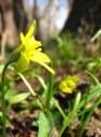 Wiosna w ogrodach wilanowskich, fot. J. Dobrzańska12.JPG