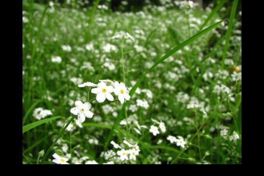 Wiosna w ogrodach wilanowskich, fot. J. Dobrzańska13.JPG