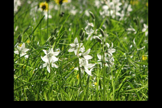 Wiosna w ogrodach wilanowskich, fot. J. Dobrzańska14.jpg