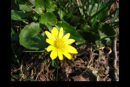 Wiosna w ogrodach wilanowskich, fot. J. Dobrzańska17.JPG