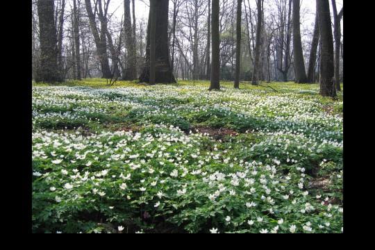 Wiosna w ogrodach wilanowskich, fot. J. Dobrzańska20.jpg