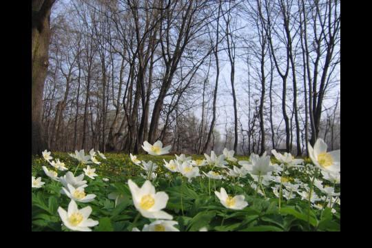 Wiosna w ogrodach wilanowskich, fot. J. Dobrzańska21.jpg