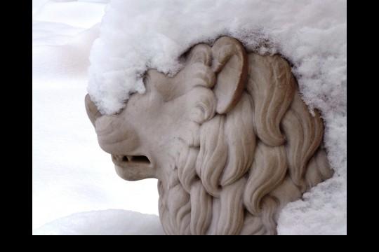 Na głowie kamiennego lwa z ogrodu wilanowskiego leży czapa śniegu