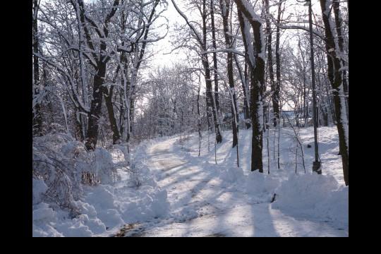 Zima w ogrodach wilanowskich, fot. J. Dobrzańska5.JPG