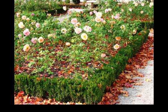 Galeria ogrodowa, fot. J. Dobrzańska.JPG