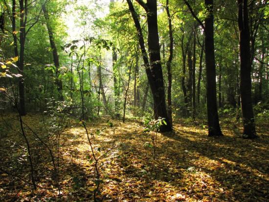 15. Jesienia w Morysinie.JPG