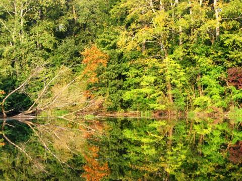 Drzewa rezerwatu Morysin przeglądają się w tafli wody. fot. J. Dobrzańska.JPG
