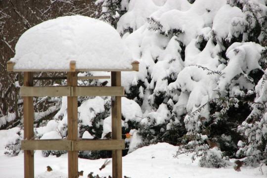 Przy parkowym karmniku pożywi się wiele ptaków, na fotografi widać żerujące mazurki, trznadle i dzwońce. fot. J. Dobrzańska.JPG