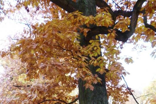 Badacze przyrody 2013_O czym szumią drzewa1. fot. Julia Dobrzańska.JPG