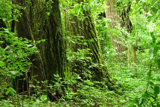 Morysin_Drzewa w rezerwacie. fot. Julia Dobrzańska.JPG