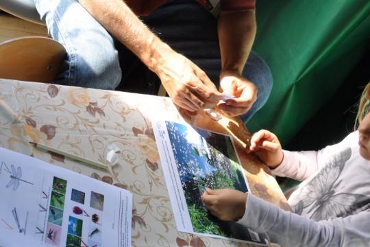 EOG_ważki_Rozwiązując karty pracy uczestnicy dowiadywali się w jakich siedliskach można spotkać różne stadia rozwojowe ważek. Fot. Ewa Pełnia-Iwanicka.JPG