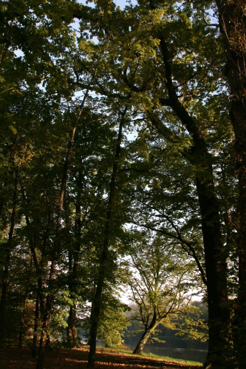 EOG_Drzewa pomnikowe2, Dąb szypułkowy, Quercus robur, fot. fram.com.jpg