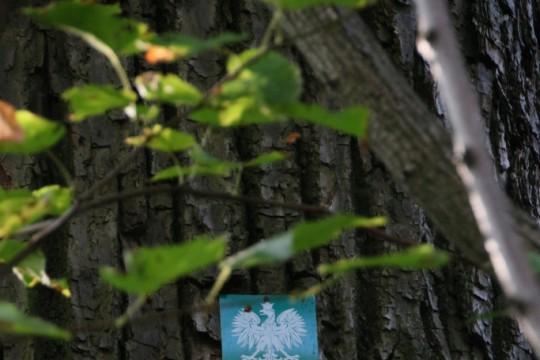 EOG_Drzewa pomnikowe5a, Lipa drobnolistna, Tilia cordata, fot. fram.com.jpg