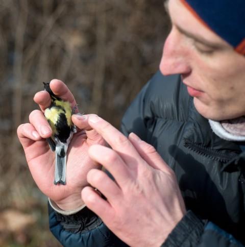 Marek Elas prezentuje upierzenie samca bogatki, fot. Wojciech Holnicki.jpg