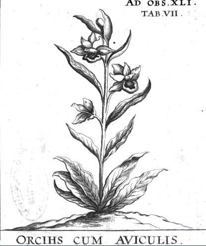 storczyk2.jpg