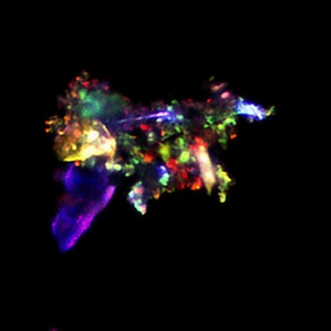 zdjęcie cząsteczki kurzu w mikroskopie konfokalnym.jpg