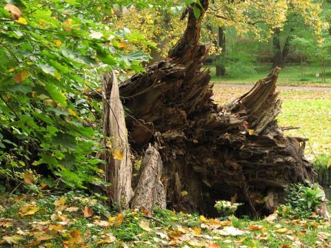 Martwe drewno. Fot. Julia Dobrzańska.JPG