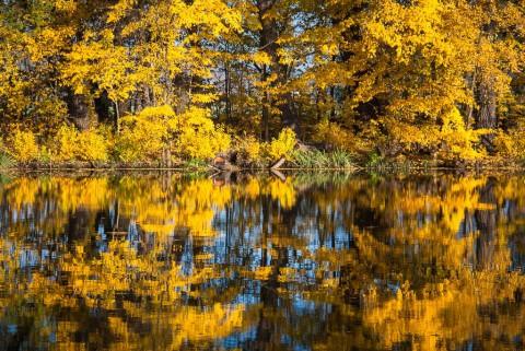 Jesień w Morysinie, fot. M. Klimowicz.jpg