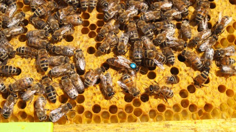 Pszczoły, fot. Kamil Baj