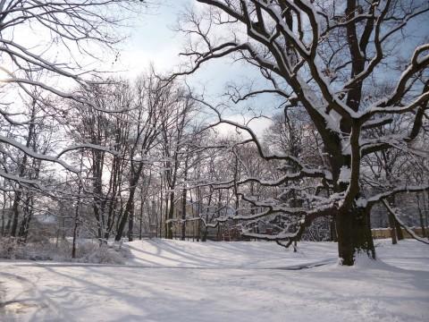 Park w zimowej szacie. Fot. Julia Dobrzańska.JPG