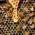 Wilanów miodem płynący | kursy pszczelarskie | podstawowy i średnio zaawansowany