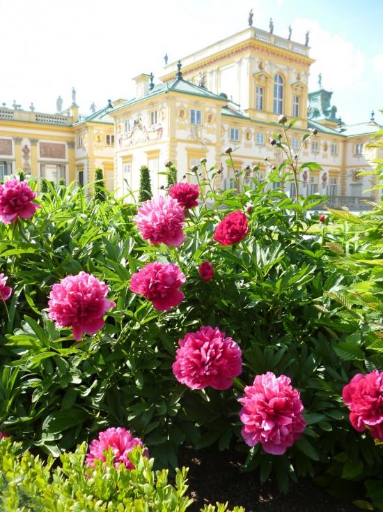 W ogrodach króla Jana III. Fot. Julia Dobrzańska.JPG