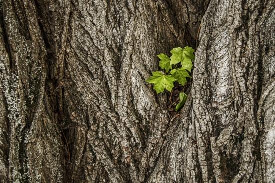 Drzewo i drzewko, fot. M. Klimowicz.jpg