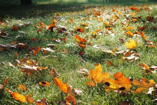 Jesienne liście. Fot. Julia Dobrzańska.JPG