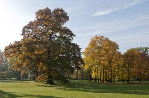 Park Południowy, fot. W. Holnicki.jpg