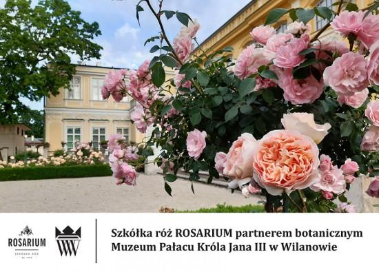 Rosarium_Wilanów.jpg
