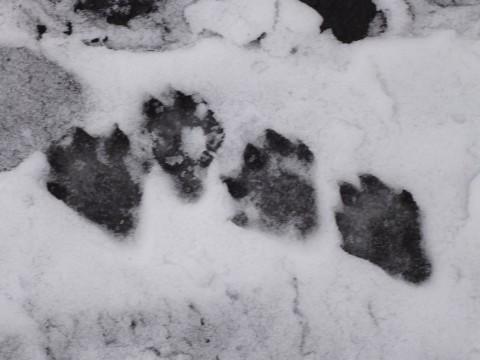 Tropy wydry. Fot. Weronika Kubicka