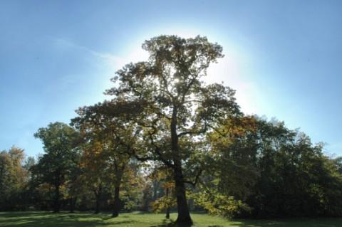 baner drzewo.png