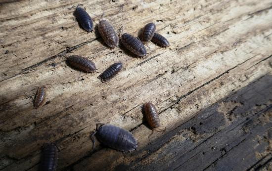 Zadanie dla przyrodnika5. Zamaskowane skorupiaki. Fot. Julia Dobrzańska.JPG