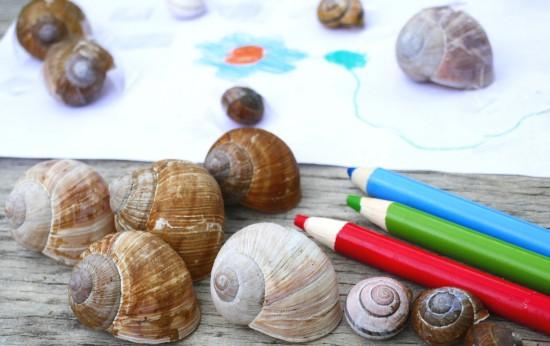 Zadanie dla przyrodnika6. W czasie spaceru można znaleźć muszelki lądowych ślimaków. Fot. Julia Dobrzańska - Kopia.JPG
